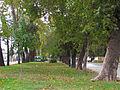 Curico, Alameda (13654176533).jpg