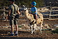 Cute kid riding a llama (2960602375).jpg