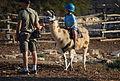 Cute kid riding a llama (2960602375).jpg