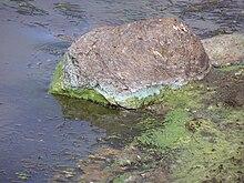 Mercury (element) - Wikiquote