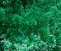 Cyanotrichite-Brochantite-Malachite-251112.jpg