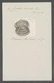 Cyclas cornea - - Print - Iconographia Zoologica - Special Collections University of Amsterdam - UBAINV0274 078 06 0004.tif