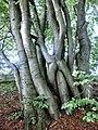 D-NW-Vlotho - Bonstapel - Naturlehrpfad - Niederwald.jpg