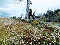 Daisies and Tree Lago Azul Trail Torres Del Paine National Park Chile.jpg