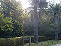Day trip to the Botanical Gardens - panoramio (17).jpg
