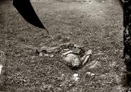 Dead soldier, Antietam