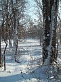 Delaware and Raritan Canal, Manville, NJ January 12th, 2011 - panoramio.jpg