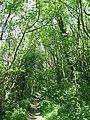 Descending Kithurst Hill - geograph.org.uk - 1329642.jpg