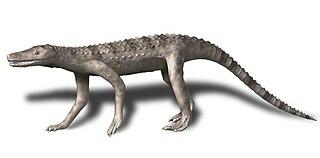 <i>Dibothrosuchus</i> genus of reptiles