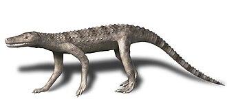 Sphenosuchia - Image: Dibothrosuchus BW