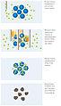 Die vier Phasen der Elektro-Chemotherapie.jpg