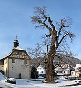 Dorflinde Haselbach.jpg