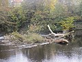 Driftwood above Wetherby Weir (16th October 2020) 002.jpg