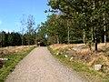 Droga do wieży widokowej - panoramio.jpg