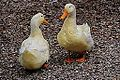Ducks (11128219076).jpg