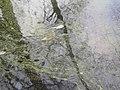 Ducks (83901789).jpg