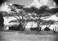ETH-BIB-Camp Serengeti-Kilimanjaroflug 1929-30-LBS MH02-07-0506.tif