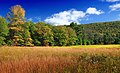 Early Autumn (5) (21962486621).jpg