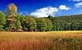 Early Autumn (5) (21962486621).jpg