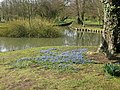 Early spring flowers near small pond at Leeds Castle - geograph.org.uk - 1218534.jpg