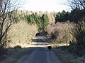 Early spring in Dean Plantation - geograph.org.uk - 159629.jpg