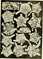 Echinodermata Ophiuroidea (1922) (21137757865).jpg