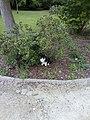 Een kat.jpg