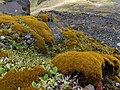 Egmont National Park, December 2015, New Zealand (33).JPG