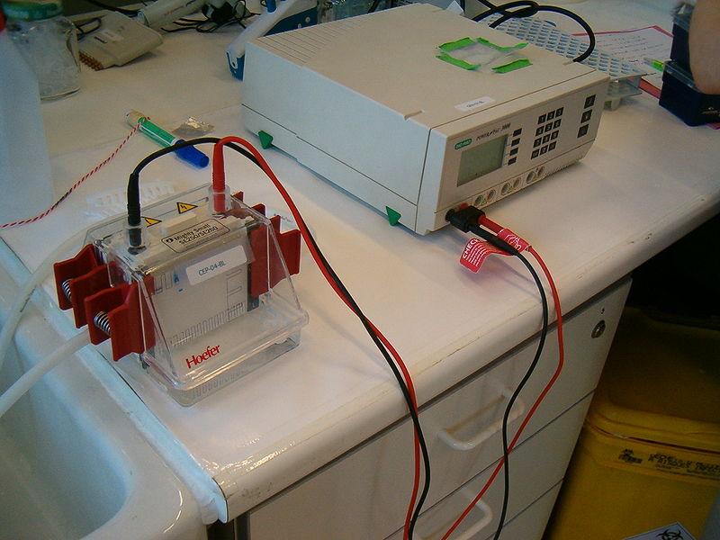 File:Electrophoresis 1D running.jpg