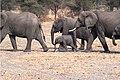 Elefanter - panoramio.jpg