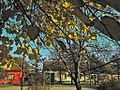Elemir street in autumn.jpg