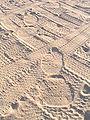 Elephant-tracks.jpg