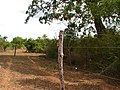 Elephant fence 01.jpg