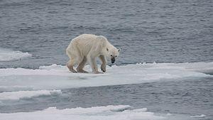 opwarming de aarde wikikids