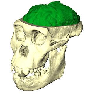 Paleoneurobiology