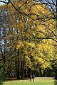 Englischer Garten Herbst-5.jpg