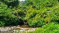 Entrance of Nangka Waterfall (Curug Nangka) in Taman Nasional Gunung Halimun Salak, West Java.jpg