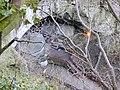 Entrance to Peak Cavern - geograph.org.uk - 429695.jpg