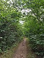 Epping Forest 20170727 111926 (49374958132).jpg
