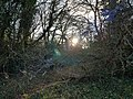 Epping Forest 20180125 145845 (49374123878).jpg