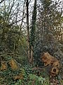 Epping Forest 20180125 145929 (49374112023).jpg