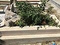 Erdal Eren'in mezarı.jpg