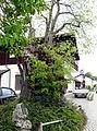Erling, ND Dorflinde HB-01.jpg