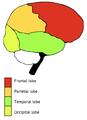 Exemple du split attention effect sur l'intégration texte-image - 2.PNG