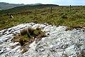 Exposed rock, Strath Bruithna - geograph.org.uk - 1352908.jpg