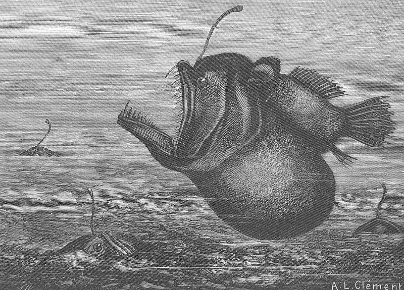 File:FMIB 46939 Melanocelus Johnstoni (Gunth).jpeg