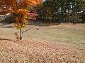 FairWay Shot - panoramio.jpg