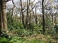 Fairbank Wood, Baildon - geograph.org.uk - 163752.jpg