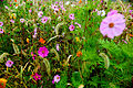 Fall-flowers-field - Virginia - ForestWander.jpg