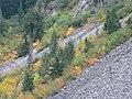 Fall colors (b87bfdd14fd7405294098ed278db6583).JPG